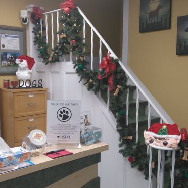 Whitby Santa Claus Parade - stairs